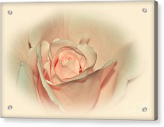 Softly Peach Acrylic Print by Kaye Menner