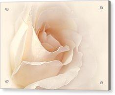 Softness Of A Peach Rose Flower Acrylic Print by Jennie Marie Schell