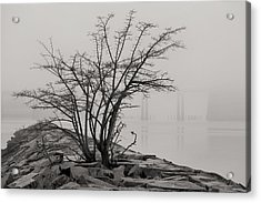 Solitary  Acrylic Print by JC Findley