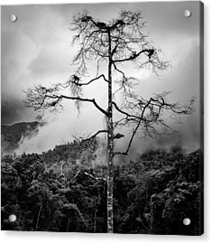 Solitary Tree Acrylic Print by Dave Bowman