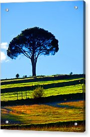 Solitude Acrylic Print by Michael Durst