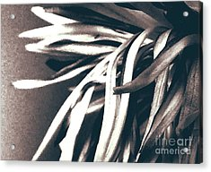 Somberity  Acrylic Print by Thommy McCorkle