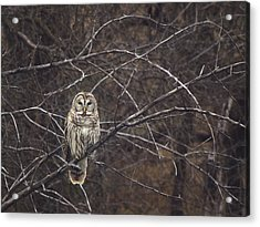 Somebody's Watching Me  Acrylic Print by Kimberly Danner