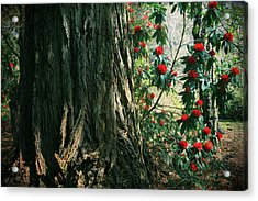 Sometimes Life Is Sweet Acrylic Print by Laurie Search