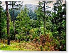 Somewhere In The Forest Over Upper Lake. Glendalough. Ireland Acrylic Print by Jenny Rainbow