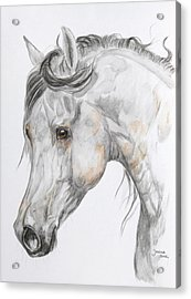 Son Of The Wind Acrylic Print by Janina  Suuronen