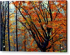 Song Of Autumn Acrylic Print by Karen Wiles