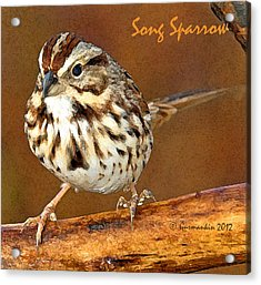 Acrylic Print featuring the photograph Song Sparrow On Tree Branch by A Gurmankin