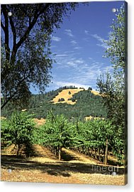 Sonoma Valley Vineyard Acrylic Print by Craig Lovell