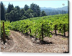 Sonoma Vineyards In The Sonoma California Wine Country 5d24512 Acrylic Print by Wingsdomain Art and Photography