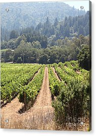 Sonoma Vineyards In The Sonoma California Wine Country 5d24515 Vertical Acrylic Print by Wingsdomain Art and Photography