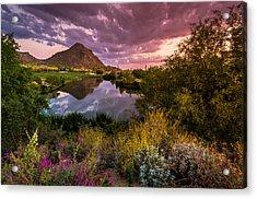 Sonoran Desert Spring Bloom Sunset  Acrylic Print by Scott McGuire