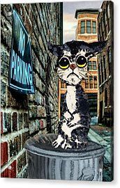 Sorrowful Cat On Can Acrylic Print by Ron Chambers