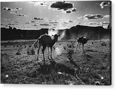 South Africa 1993 Acrylic Print by Rolf Ashby