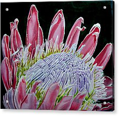 South African Flower Protea Painting Acrylic Print by Sylvie Heasman