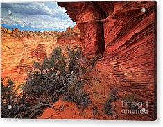 South Coyote Buttes Grand View Acrylic Print by Inge Johnsson