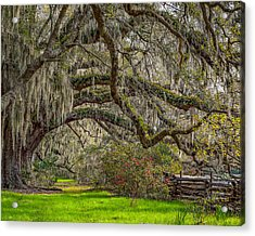 Southern Charm Acrylic Print by Steve DuPree