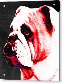 Southern Dawg By Sharon Cummings Acrylic Print by Sharon Cummings