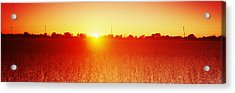 Soybean Field At Sunset, Wood County Acrylic Print by Panoramic Images