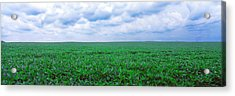 Soybean Field, Coles, Philo, Urbana Acrylic Print by Panoramic Images
