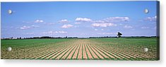 Soybean Field In A Landscape, Marion Acrylic Print by Panoramic Images