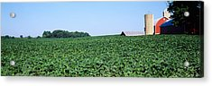 Soybean Field With A Barn Acrylic Print by Panoramic Images