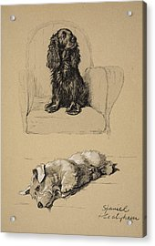 Spaniel And Sealyham, 1930 Acrylic Print by Cecil Charles Windsor Aldin