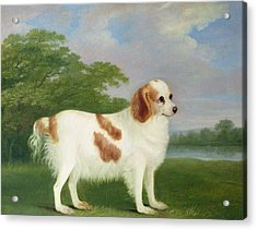 Spaniel In A Landscape Acrylic Print by John Nott Sartorius