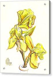 Spanish Irises Acrylic Print by Kip DeVore