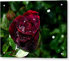 Sparkling Red Rose Acrylic Print by Camille Lopez