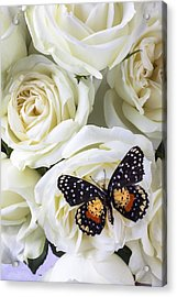 Speckled Butterfly On White Rose Acrylic Print by Garry Gay