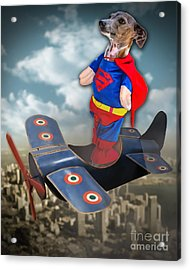 Speedolini Flying High Acrylic Print by Kathy Tarochione