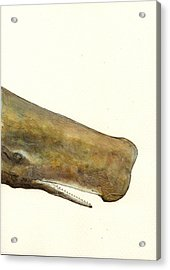 Sperm Whale First Part Acrylic Print by Juan  Bosco