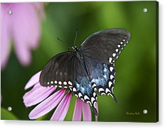 Spice Of Life Butterfly Acrylic Print by Christina Rollo