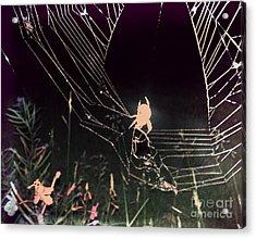 Spider Acrylic Print by Jennifer Kimberly