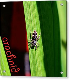 Spider On Green Leaf Acrylic Print by Toppart Sweden