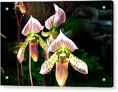 Spider Orchid Acrylic Print by Lanjee Chee