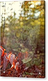 Spider Web Acrylic Print by Edward Fielding