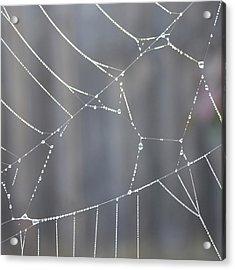 Spider Web In Rain Acrylic Print by Cheryl Miller