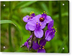Spiderwort And Friend Acrylic Print by Mark Weaver