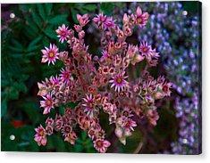 Spiky Flowers Acrylic Print by Omaste Witkowski