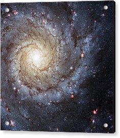 Spiral Galaxy M74 Acrylic Print by Adam Romanowicz