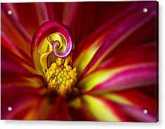 Spiral Acrylic Print by Mary Jo Allen