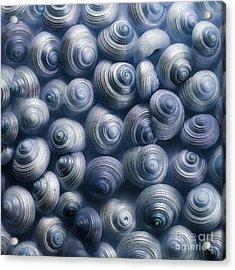 Spirals Blue Acrylic Print by Priska Wettstein