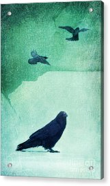 Spirit Bird Acrylic Print by Priska Wettstein