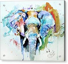 Splash Of Colour Acrylic Print by Steven Ponsford