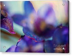 Splash Acrylic Print by Sue OConnor