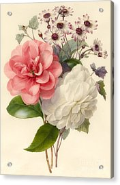 Spray Of Three Flowers Acrylic Print by Marie Anne
