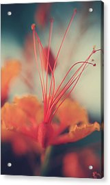 Spread The Love Acrylic Print by Laurie Search