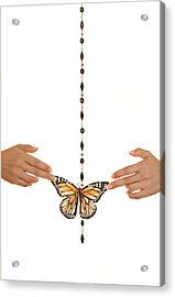 Spread Your Butterfly Wings Acrylic Print by Dario Infini